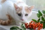Марруся - белая с рыжим