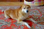 Юзик - 5-6 лет, рост до колена