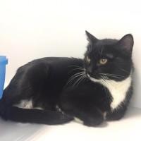 Косатка - красивая кошка