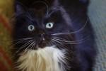Фелиция - монохромная кошь из-под колес