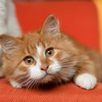 Фреш - полезный котенок