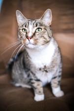 Томми Миу - котяра здоровяк