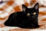 Микка Алтайская - черная принцесса