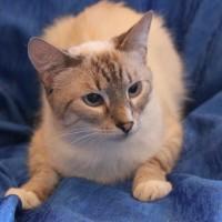 Морисс - котик в дар