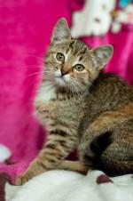 Габриэлька Мядельская - тигровая мимишность
