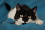 Марин - милый котя