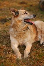 Жуля-хуторская - спокойная собака