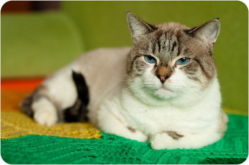 аллергия на сухой корм у кошек симптомы