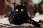 Лиам - бесподобный котик