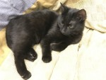 Багирка - черная красавица