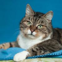Пуфик - уютный котик