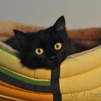 Яша-Трубочист - самый лучший котик