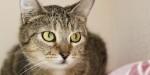 Михалина - кошка из простых