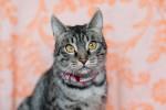 Арчи Дубравенский - инопланетный котик
