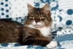 Прасковья Минчакова - чудесная кошь!