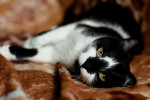 Большун - молодой котик для активных людей
