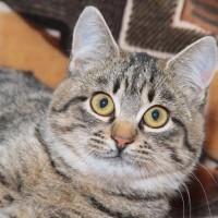 Шейла Тигровая - кругломордая симпатяга