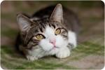 Али - фартовый котик