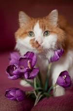 Барсюша Пушкин - возрастной кот с верой в чудо!