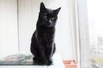 Мерси - чёрный кот