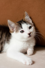 Шипа - маленький коточек
