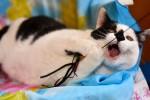 Филимон - большой брутальный бело-черный мачо