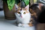 Рыся Куликовская - счастливая трехцветочка