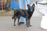 Бася-Балбася - чудо-пес в дар!