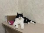 Фадей - черно-белый молодой котик