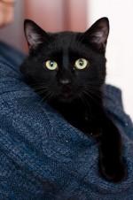 Миф - сказочный котик
