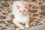 Йогурт Нежный - невероятно ласковый котик