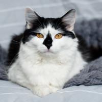 Доминошка Цнянская