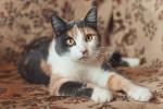 Карина Белецкая - чудодевочка трехцветочка