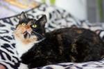 Йока - удивительная кошка
