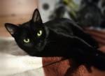 Марго Блэк - очаровательная кошечка в дар