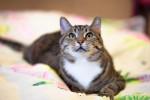 Медея Тигровая - кошачья богиня