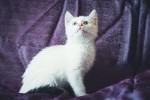 Хана - маленькая беляночка