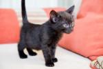 Фланелька - черная личинка кошки