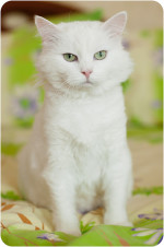 Лайза Красотка - белоснежка зеленоглазка!