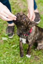 Шери - белая лапка чудо собака