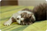 Анжелина (Джоли) - очаровательная котозвёздочка