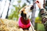 Жуля Лельчицкая - собака с янтарными глазами