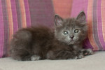 Флори - серебристая милашка