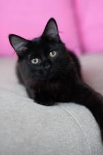 Токио - шикарный котик