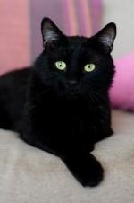 Ребус - интересный котик