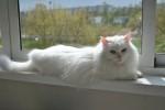 Аглая Зеленоглазая - снежная королева