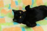 Найтик - чёрненький ласковый мальчишка