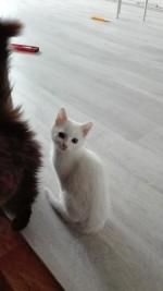 Снежень - белоснежный милашка-котенок
