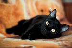 Эридан - котик на вес золота
