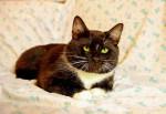 Кит - чудесный котик